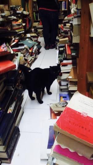 Libreria de viejo